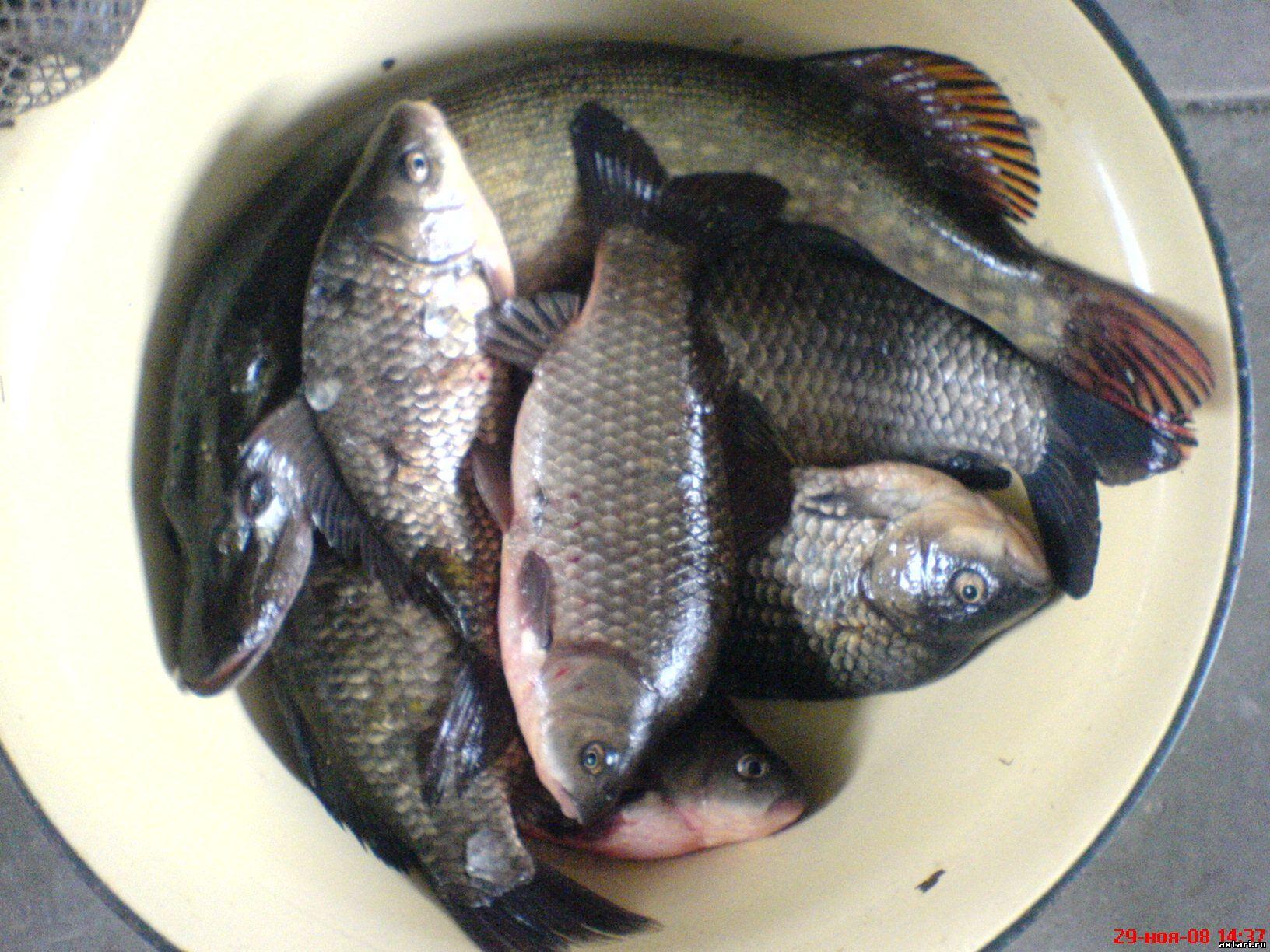 какая рыба есть в азовском море фото
